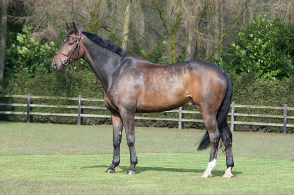 Horse_Djingis_Khan2