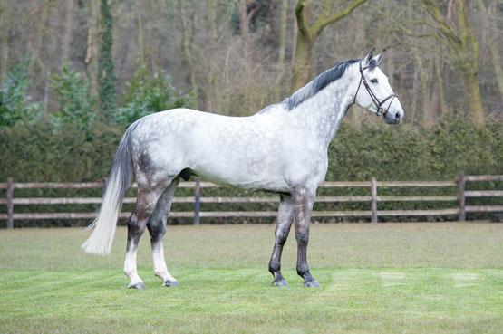 Horse_Chello2
